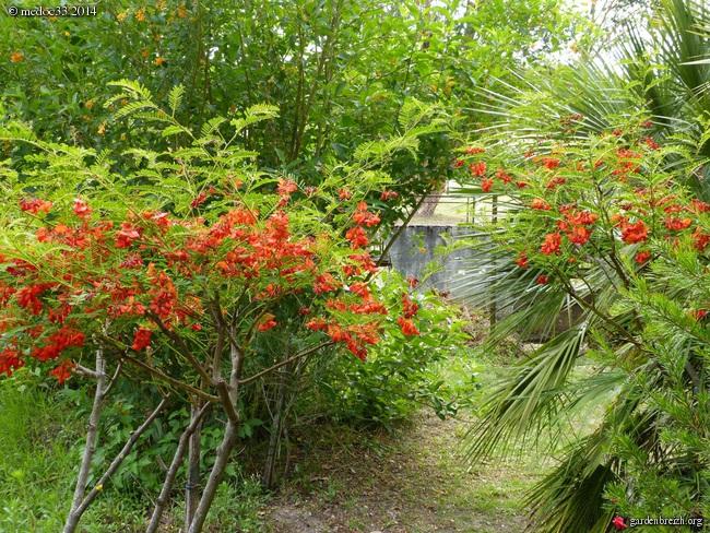 j'ai descendu dans mon jardin GBPIX_photo_630838
