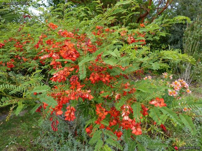 j'ai descendu dans mon jardin GBPIX_photo_630839