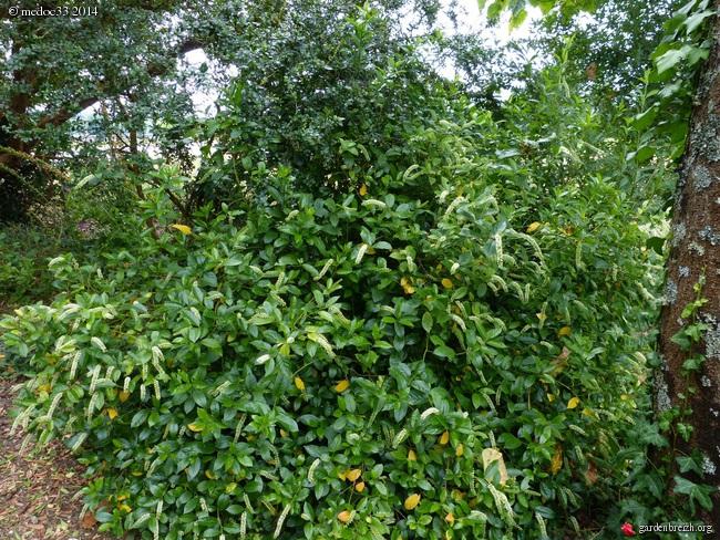 j'ai descendu dans mon jardin - Page 3 GBPIX_photo_630846
