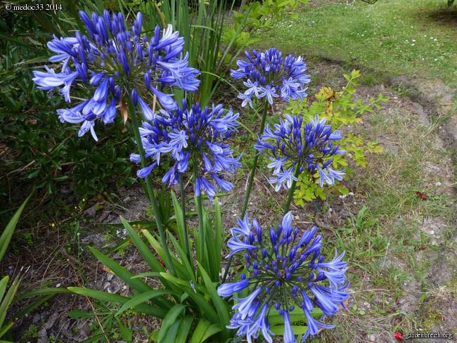 j'ai descendu dans mon jardin - Page 2 GBPIX_photo_630856