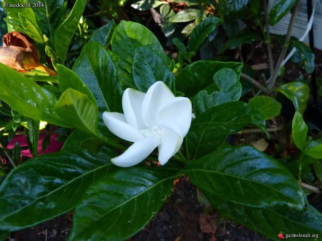 j'ai descendu dans mon jardin GBPIX_photo_631425