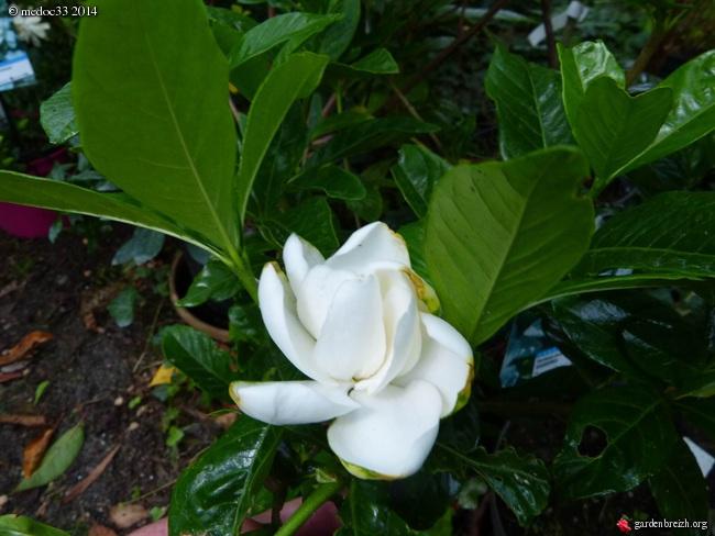 j'ai descendu dans mon jardin GBPIX_photo_631427