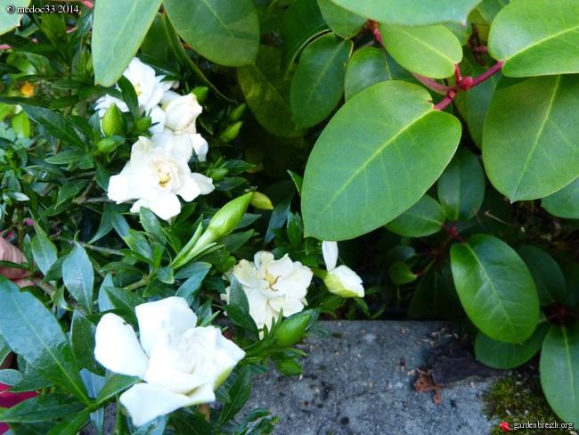j'ai descendu dans mon jardin GBPIX_photo_631428
