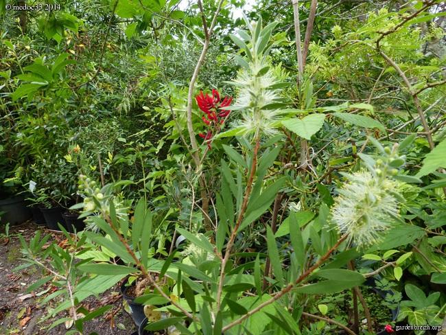 j'ai descendu dans mon jardin - Page 2 GBPIX_photo_631431