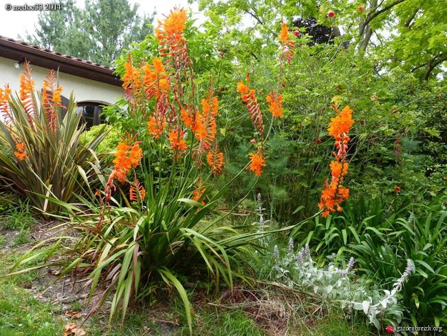 j'ai descendu dans mon jardin GBPIX_photo_631435