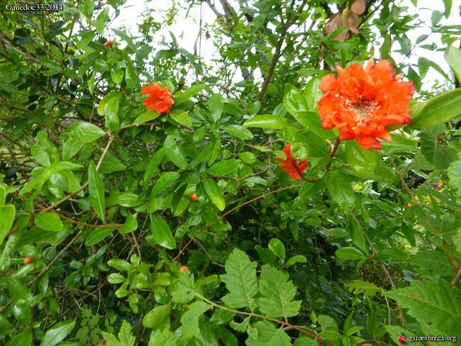 j'ai descendu dans mon jardin - Page 2 GBPIX_photo_631438
