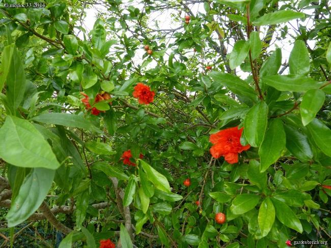 j'ai descendu dans mon jardin - Page 2 GBPIX_photo_631441