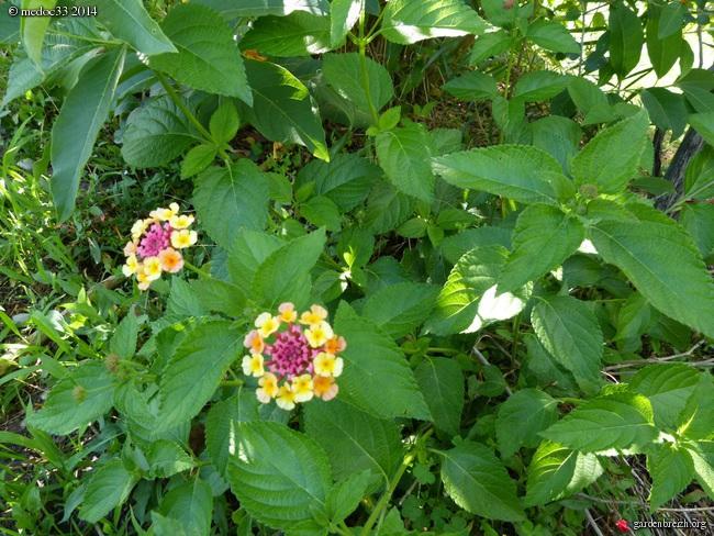 j'ai descendu dans mon jardin - Page 2 GBPIX_photo_631453