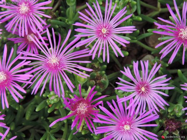 Air d'été au jardin - Page 2 GBPIX_photo_631544