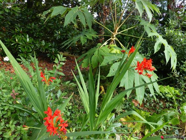 j'ai descendu dans mon jardin - Page 2 GBPIX_photo_631924
