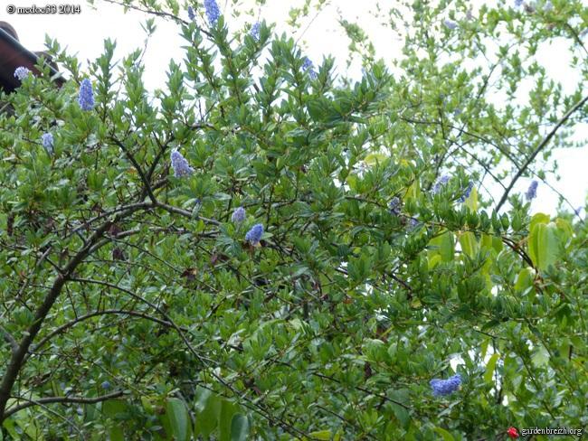 j'ai descendu dans mon jardin - Page 2 GBPIX_photo_631925