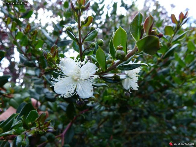 j'ai descendu dans mon jardin - Page 3 GBPIX_photo_631930