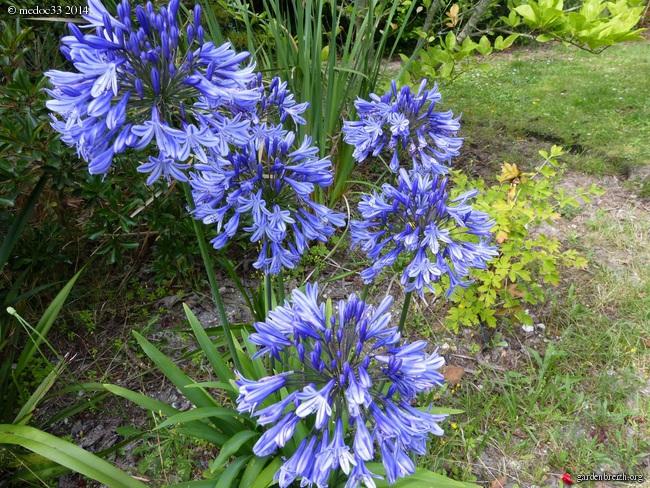 j'ai descendu dans mon jardin - Page 2 GBPIX_photo_631934