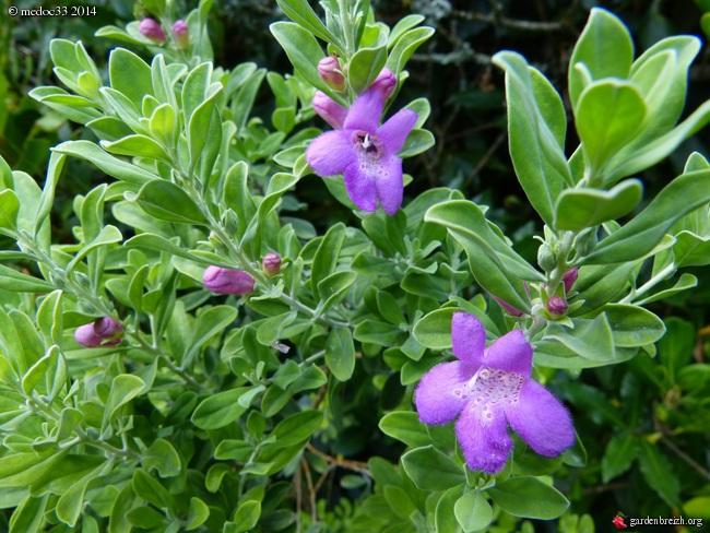 j'ai descendu dans mon jardin - Page 2 GBPIX_photo_632109