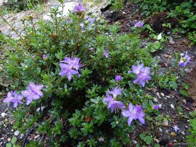 j'ai descendu dans mon jardin - Page 3 GBPIX_photo_632110