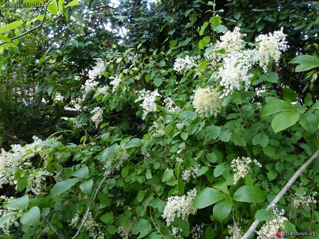 j'ai descendu dans mon jardin - Page 2 GBPIX_photo_632116