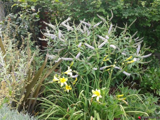 j'ai descendu dans mon jardin - Page 2 GBPIX_photo_632706