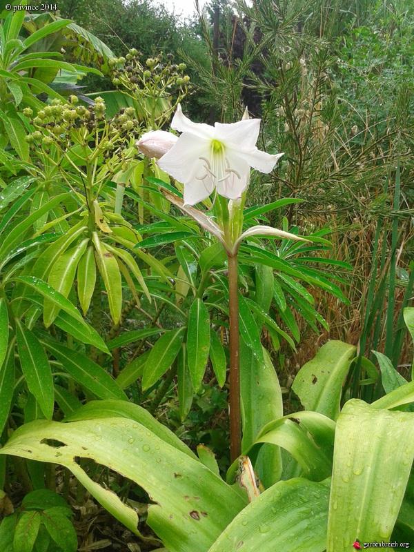 j'ai descendu dans mon jardin - Page 2 GBPIX_photo_632709