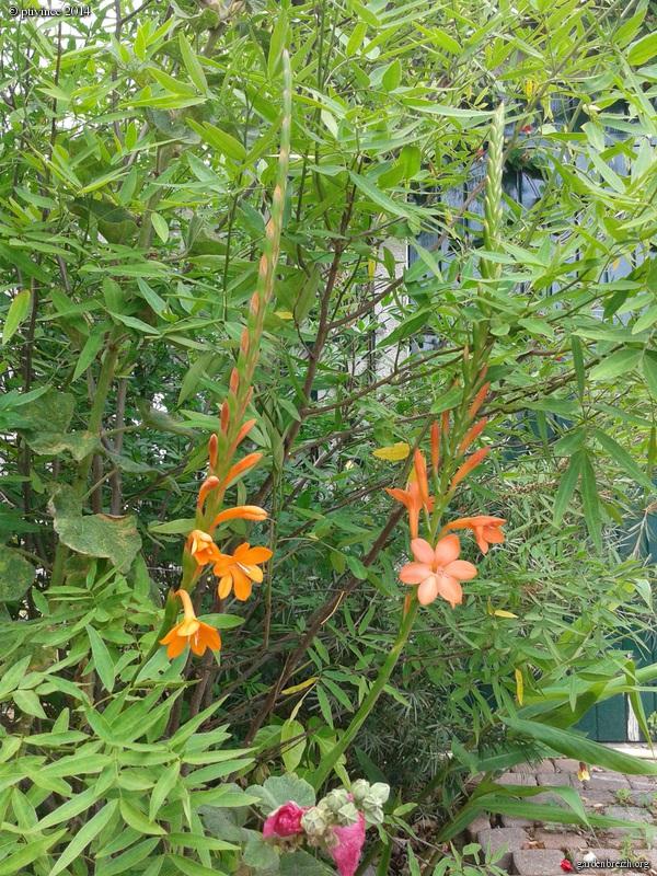 j'ai descendu dans mon jardin - Page 2 GBPIX_photo_632711