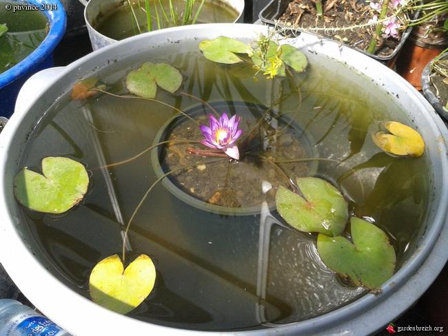 construction d'un bassin .. GBPIX_photo_632714
