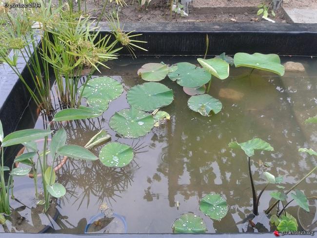 construction d'un bassin .. GBPIX_photo_632715