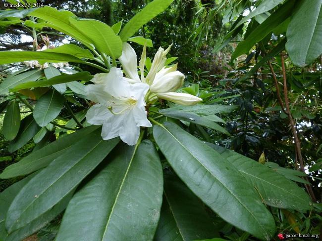 nos plantes parfumées - 2011-2015 - Page 3 GBPIX_photo_632835