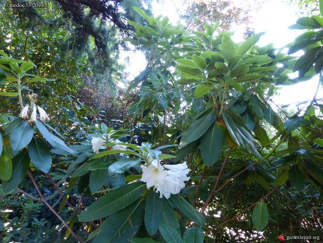 nos plantes parfumées - 2011-2015 - Page 3 GBPIX_photo_632836
