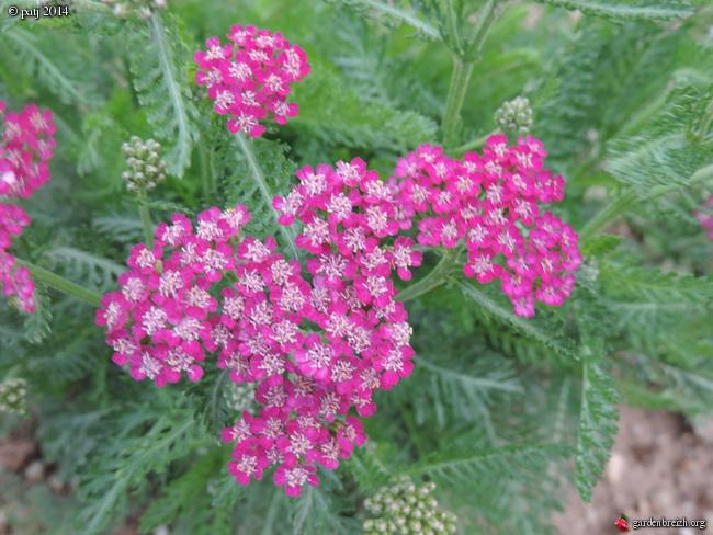 Les botanistes  - Page 5 GBPIX_photo_632964