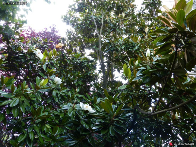 nos plantes parfumées - 2011-2015 - Page 3 GBPIX_photo_633102