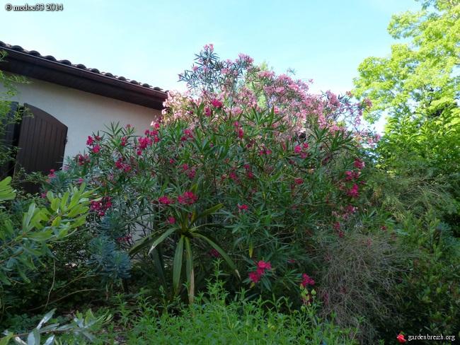 nos plantes parfumées - 2011-2015 - Page 3 GBPIX_photo_633105