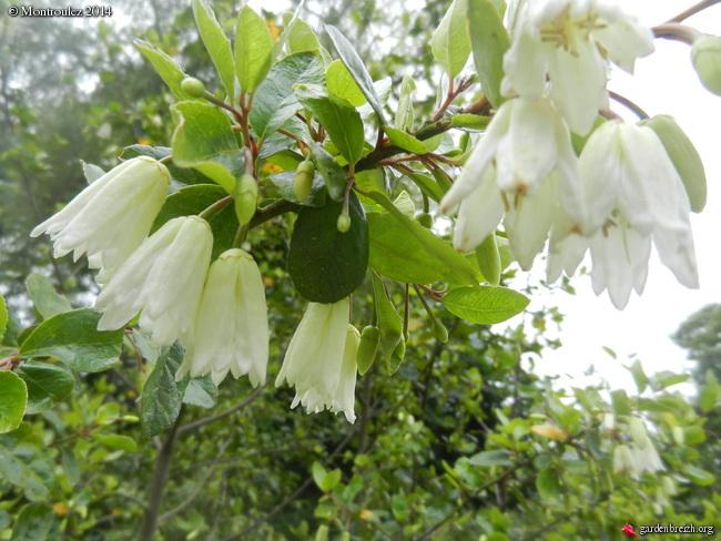 massifs en blanc - fleurs et feuillages : belles associations  GBPIX_photo_633409