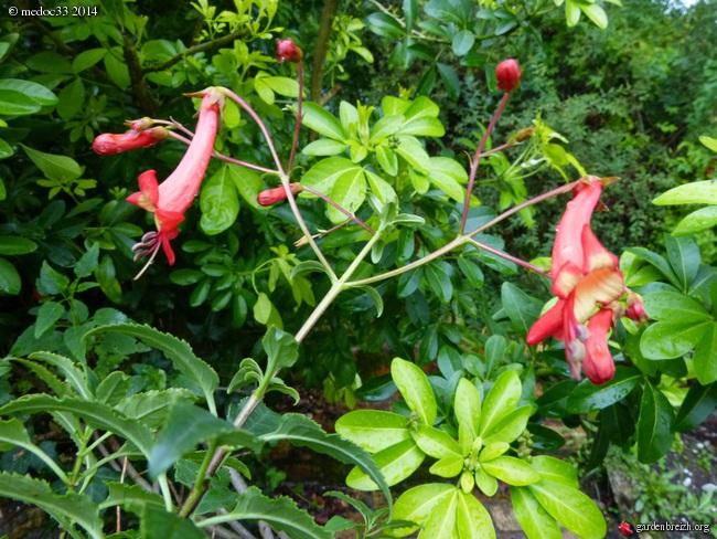 j'ai descendu dans mon jardin - Page 5 GBPIX_photo_633882