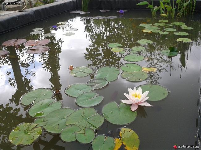 construction d'un bassin .. GBPIX_photo_633914