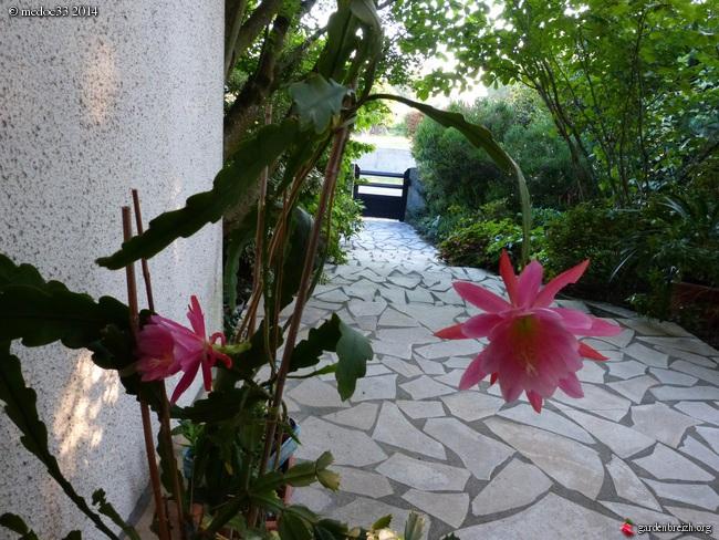 j'ai descendu dans mon jardin - Page 5 GBPIX_photo_634232