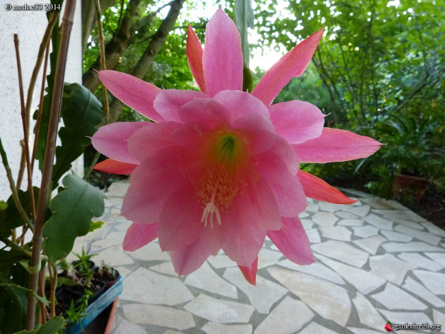 j'ai descendu dans mon jardin - Page 5 GBPIX_photo_634233