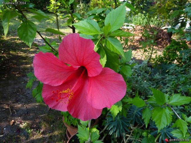 j'ai descendu dans mon jardin - Page 5 GBPIX_photo_634238