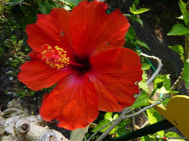 j'ai descendu dans mon jardin - Page 5 GBPIX_photo_634239