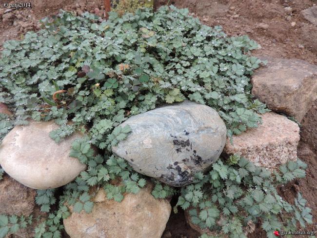 Les botanistes  - Page 2 GBPIX_photo_634299
