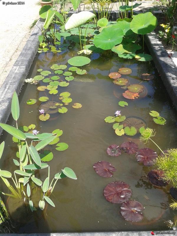 construction d'un bassin .. - Page 2 GBPIX_photo_634688