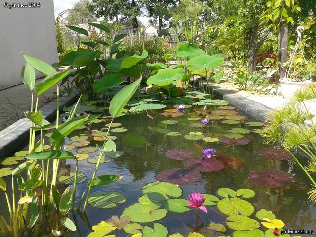 construction d'un bassin .. - Page 2 GBPIX_photo_635845
