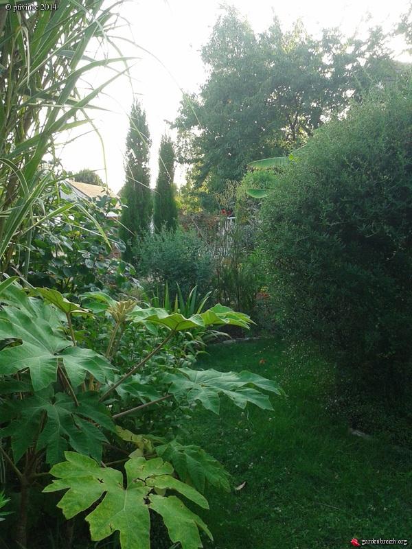 ambiances estivales au jardin - 2014 GBPIX_photo_635860