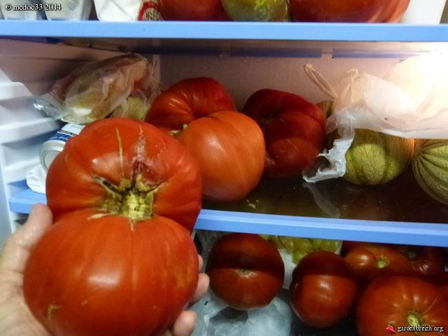 Solanum lycopersicum - les tomates - Page 5 GBPIX_photo_638478