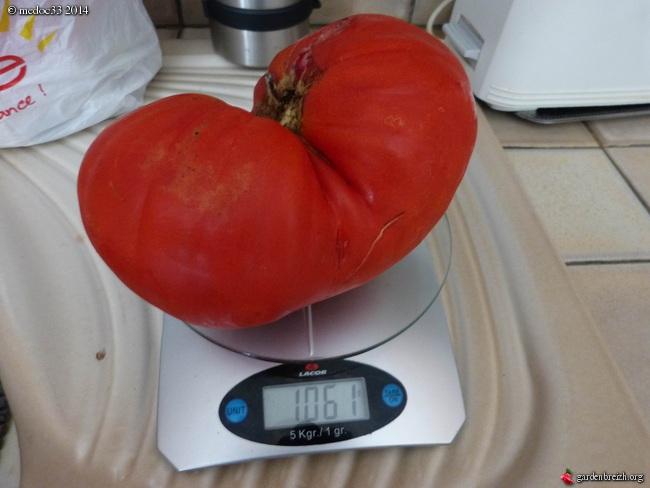 Solanum lycopersicum - les tomates - Page 5 GBPIX_photo_638479