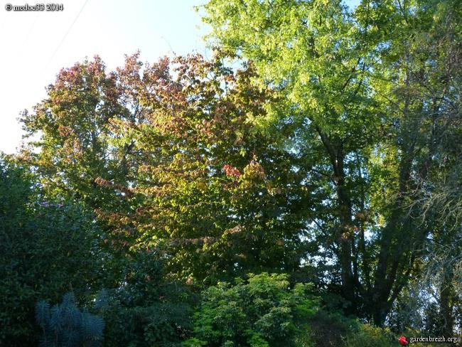 l'automne arrive... GBPIX_photo_638658