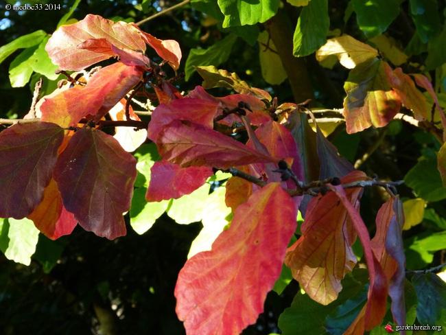 l'automne arrive... GBPIX_photo_638660