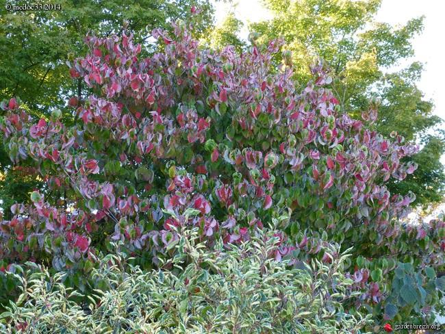 l'automne arrive... GBPIX_photo_638662