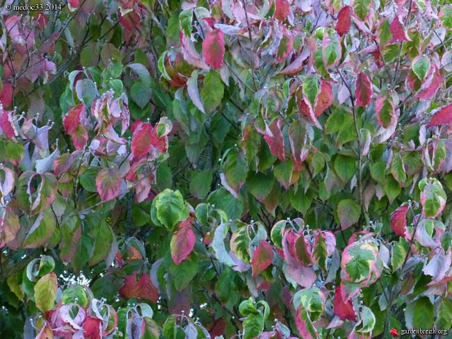 l'automne arrive... GBPIX_photo_638663
