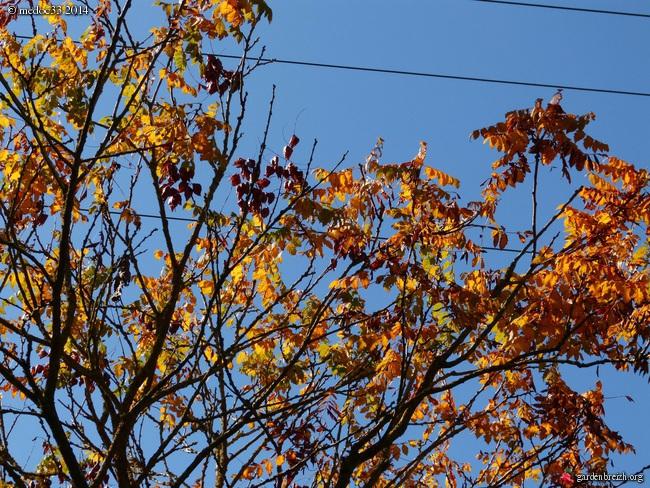 l'automne arrive... GBPIX_photo_638666