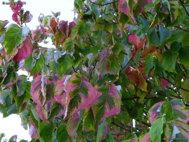 l'automne arrive... GBPIX_photo_638668