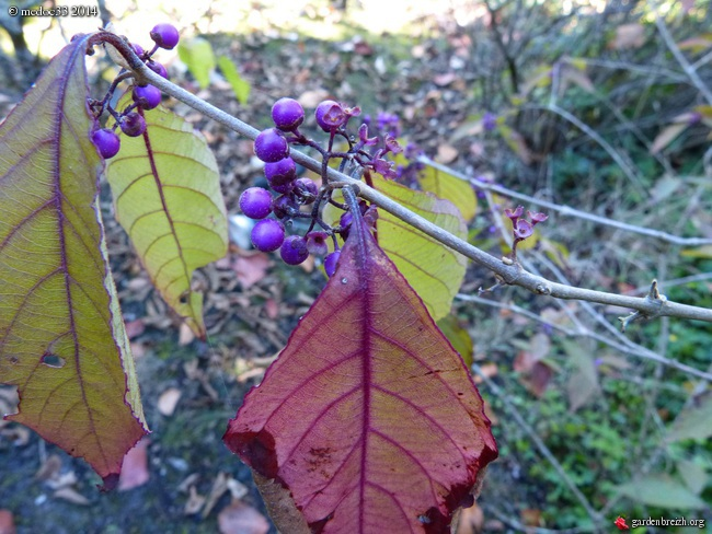 l'automne arrive... GBPIX_photo_638670